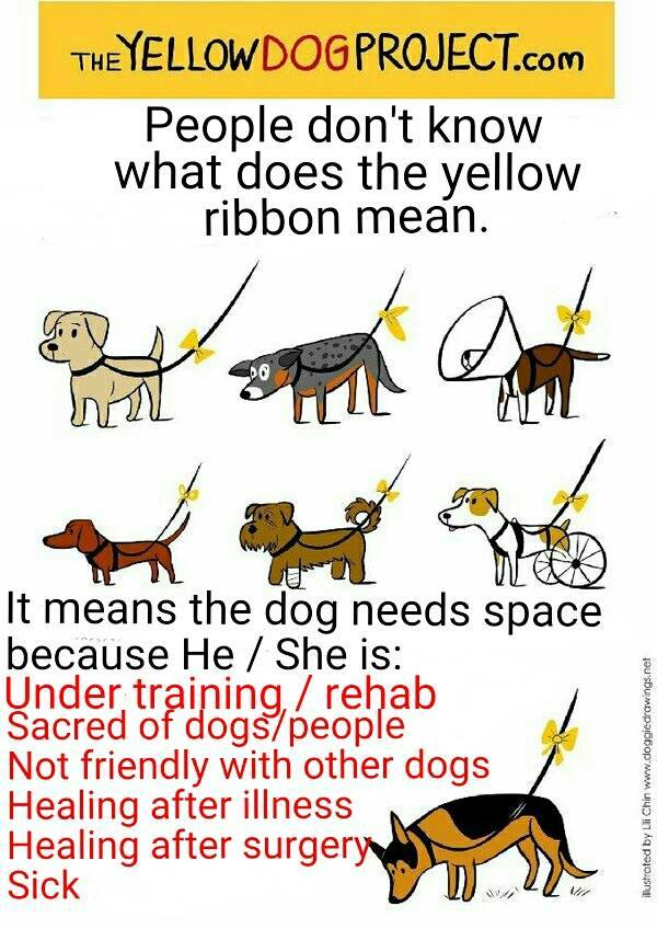 The Yellow Dog Project